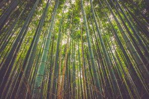 bamboe interieur