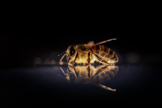 bijenbekjes plaatsen