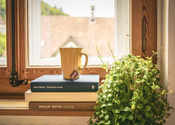 Kamerplanten geven je woning een gezellige feeling