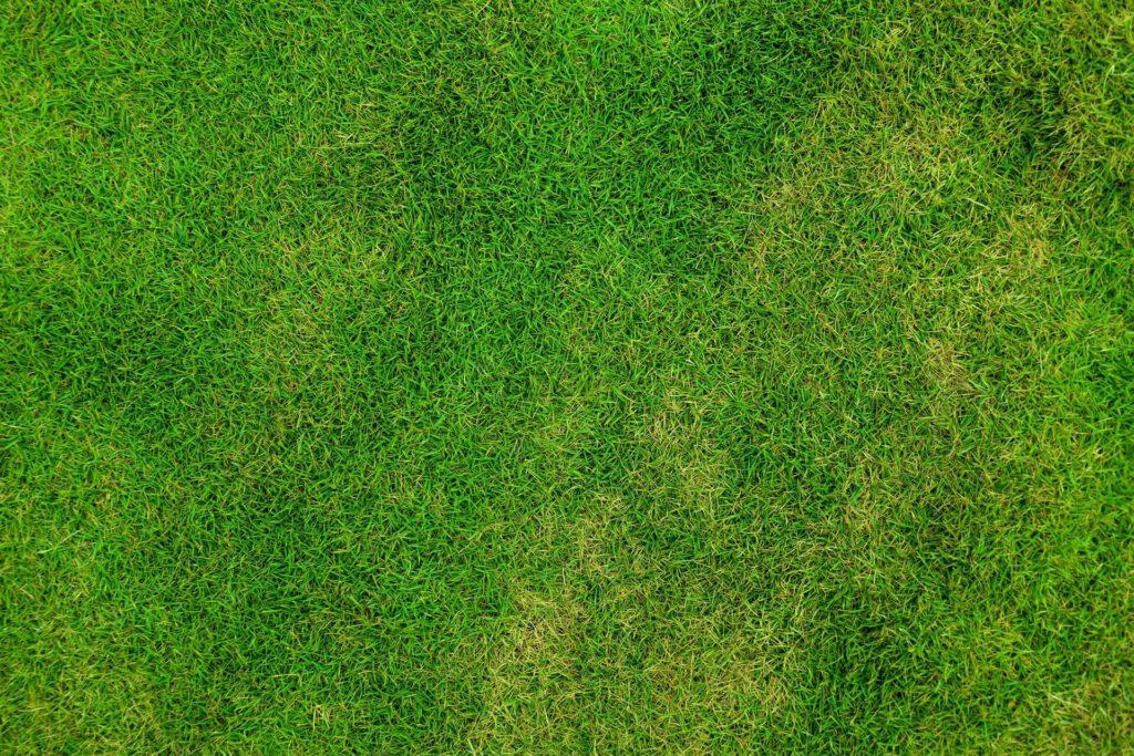 graszoden voor nieuw gazon